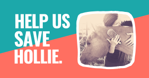 help us save hollie person hugging horse holding paddle brush